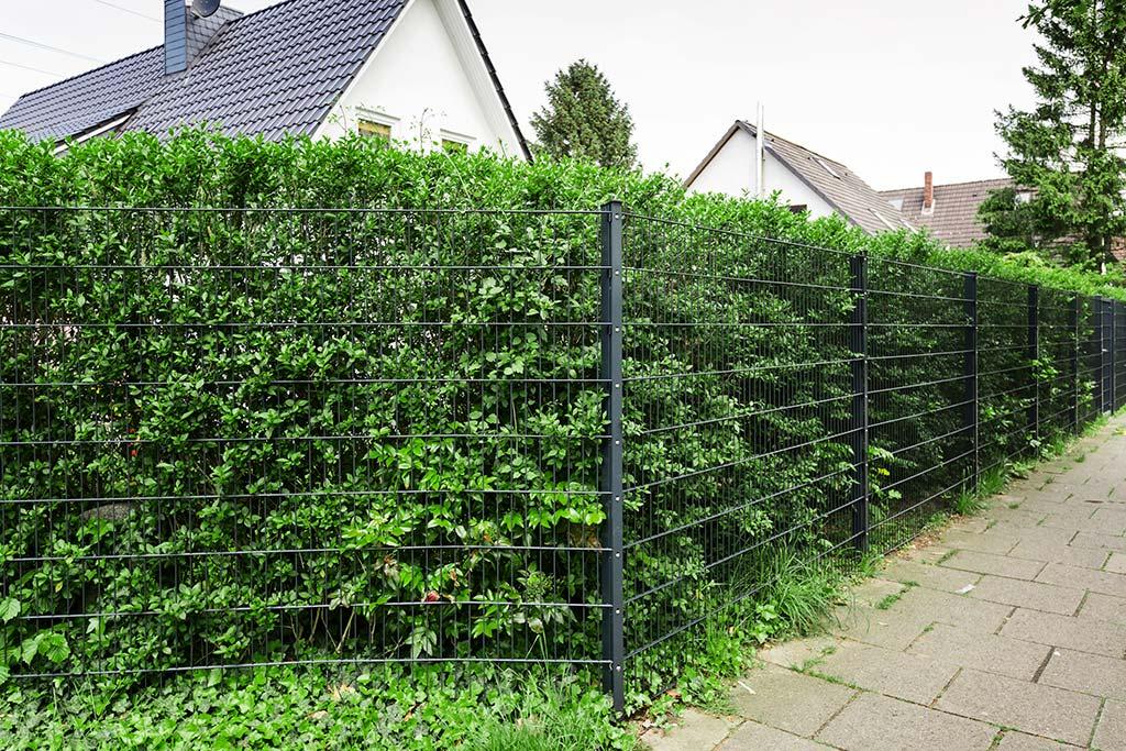 Doppelstabmatten als Gartenzaun